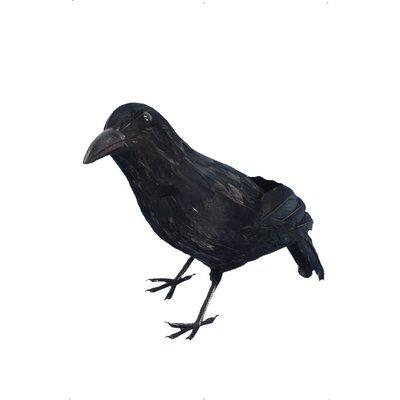 Kråka med fjädrar svart