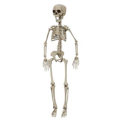 Skelett 76 cm
